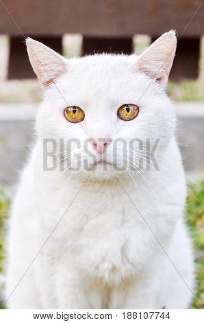 Sad white cat wih unhappy muzzle outside