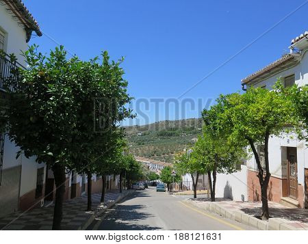 Lemon Trees In Village Street