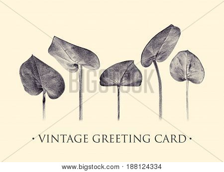 Set of eucalyptus. Botanical natural illustration. Spring plants. Floral greeting card drawn by hand with pencil. Tinted black and white