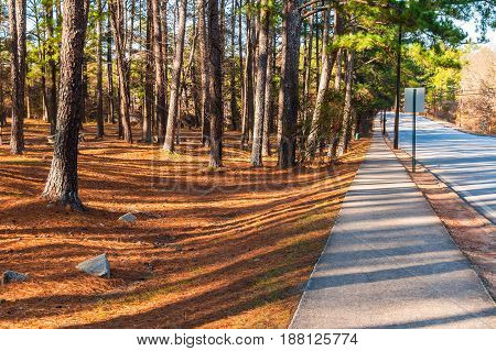 View of sidewalk and trees with long shadows in the Stone Mountain Park in sunny autumn day Georgia USA