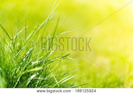 Grass In The Front And The Background Out Of Focus