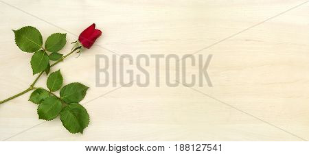 Love concept - red rose banner background with copy space