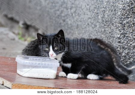 homeless unhappy cat with kitten eat on the street