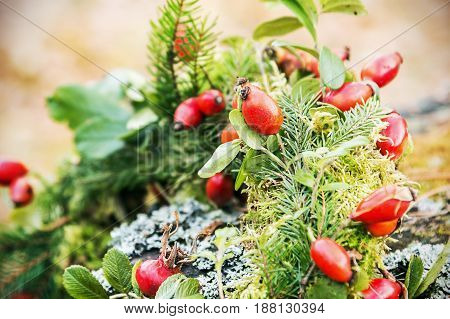 Rose hips blossom in the forest. Rose hips on them focus