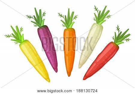 Fresh colorful  carrots icon isolated on white background.  Yellow, violet, orange, white and red carrot icons.
