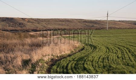 green field with bends of rows, withered bushes and grass, hills and electric poles with wires at background. hare in grass