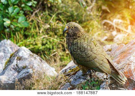 The kea so called