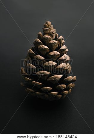 A pine cone on a gray background.