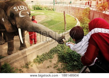 Kid is giving money to a elephant SUZI in the Lahore zoo Punjab Pakistan 24/03/2016