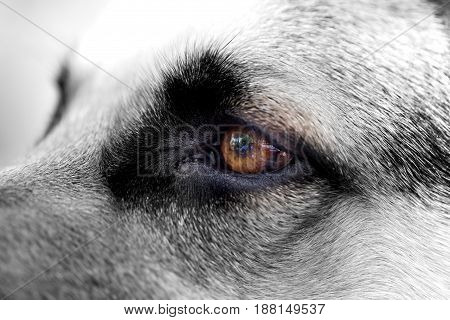 The dog's eyes are on the nature. macro