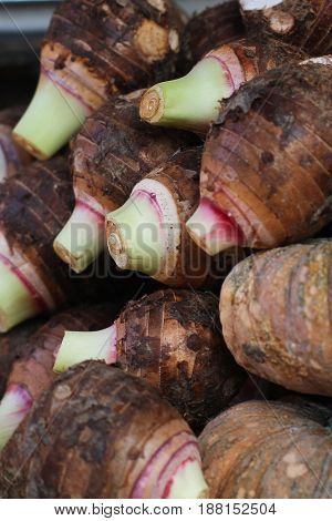 group of stcking raw Taro (Yautia Lila), close-up fresh taro in fresh market