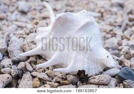 Seashell On Rocky Shore.