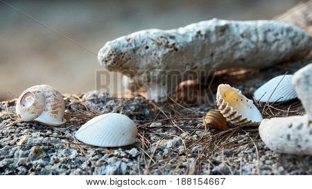 Seashells On A Stone On Koh Phangan