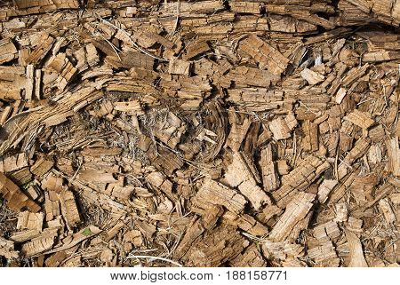 Rotted dry mouldering crushed pine tree trunk wood natural textured background closeup. Old age death and destruction creative concept.