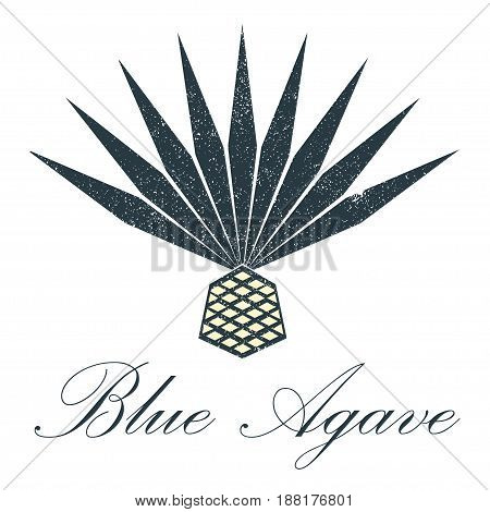 Blue agave vector. Grange illustration for logos or emblems