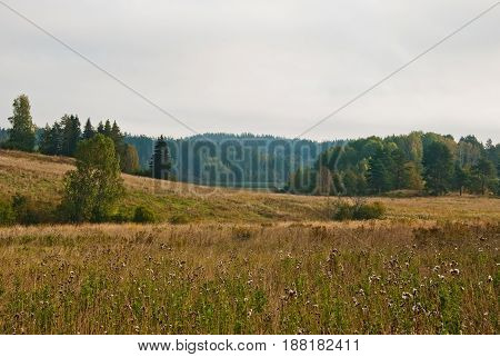 Scandinavian landscape. Autumn forest in South Karelia