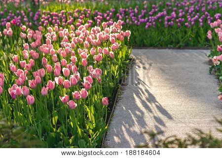 Tulips in the park. summer in Russian. Moscow