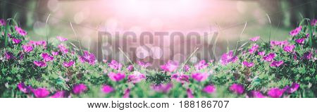 Flowers bells of the field background. Spring landscape.Toning