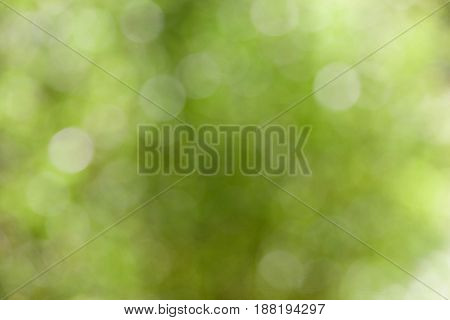 Abstract green defocused bokeh background with space for text.
