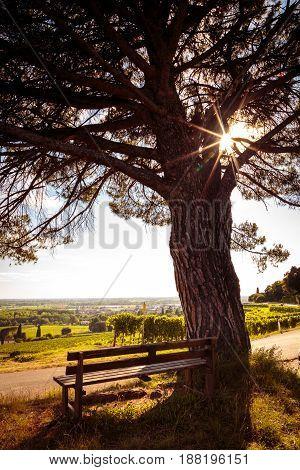 Grapevine Field In The Italian Countryside