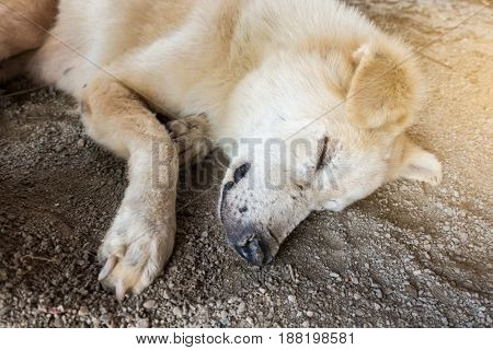 Closeup for dog sleeping on the ground