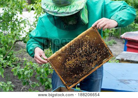 Beekeeper holding frame of honeycomb with bees