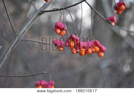 Red and pink harvest nature picture in autumn