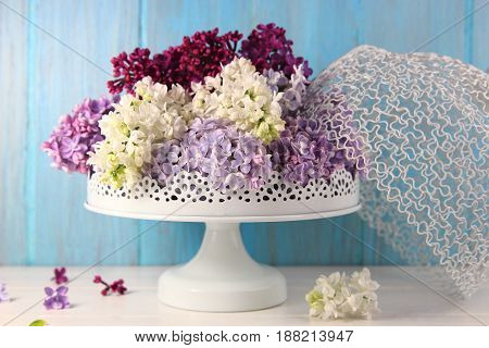 colorful lilacs in a white vase on a blue background