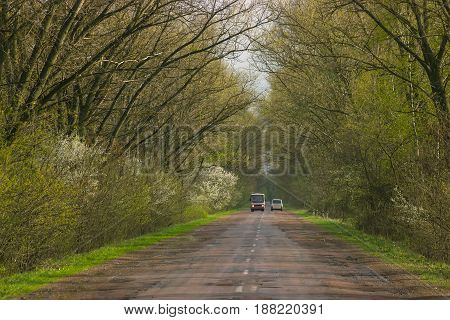 Landscape of straight road under the trees