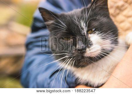 Cute kitten in hand at evening sunrays