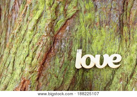Wooden love sign on tree trunk texture. Love history concept