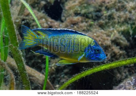Green And Blue Colored Tropical Wildlife Fish
