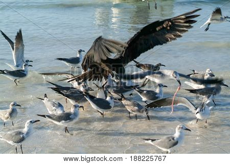 Various Birds Flying And Swimming At The Beach Of Holbox