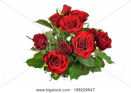 Overhead shot of beautiful red roses isolated on white background