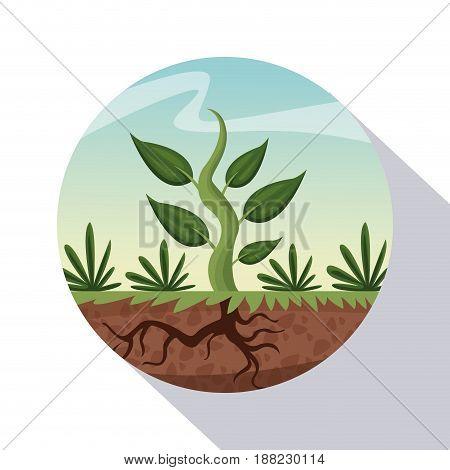 circular frame shading of poster closeup growing plant vector illustration