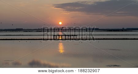 lake sunset with birds on the sky