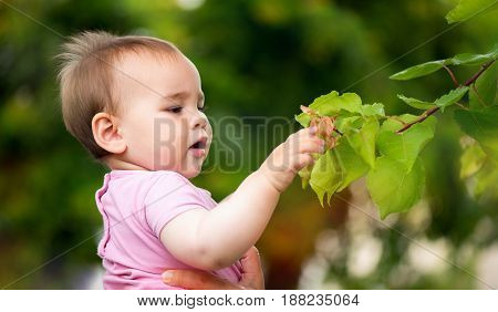 Little Baby Girl Touching Leaves Of A Tree In Summer Outdoors In Nature