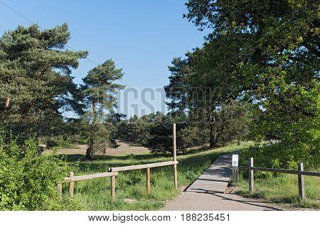 Nature conservation area Schwanheimer dune in Frankfurt am Main, Hesse, Germany