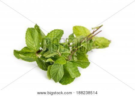 Bunch of fresh aromatic peppermint leafs on white background
