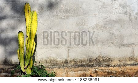 Background block wall has yellow cactus tree and small flowers.