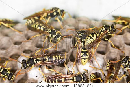 A wasps. close . Macro photo in nature