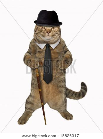 The cat dandy is holding a cane. White background.