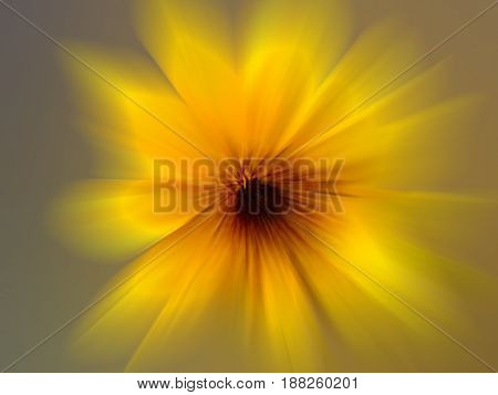 Sunflower : Scientific name: Helianthus annuus isolated on white.