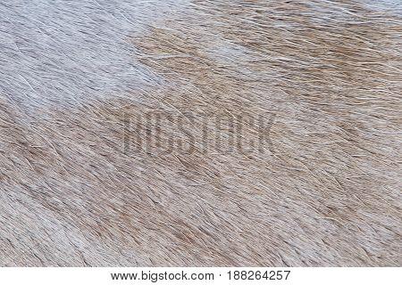 Light Brown Animal Fur
