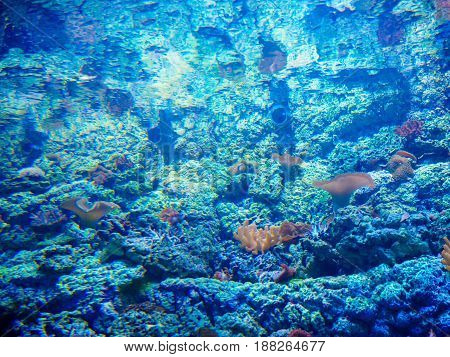 abstract shallow coral garden with glossy water surface and colorful yellow fish playing in sunshine