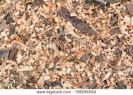 Cutting tree wood sawdust lie on the ground