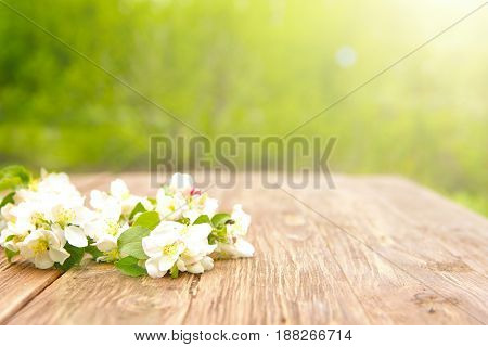 Spring Flowers Of Blossoming Apple Tree Branches On Rustic Wooden Table Over Green Garden. Sunbeam