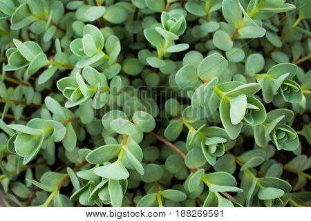 Thick Thickets Of Green Foliage