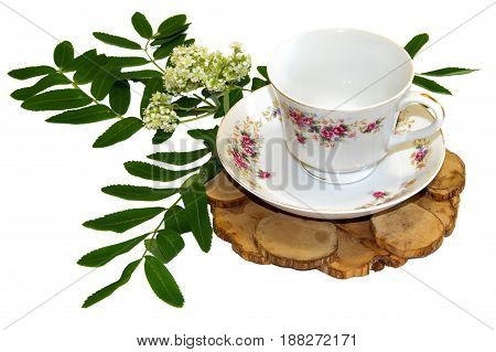 A Bouquet Of Fresh Rowan Tree Flowers  Near A Tea Pair From A Saucer Cup Of Old Porcelain Service On