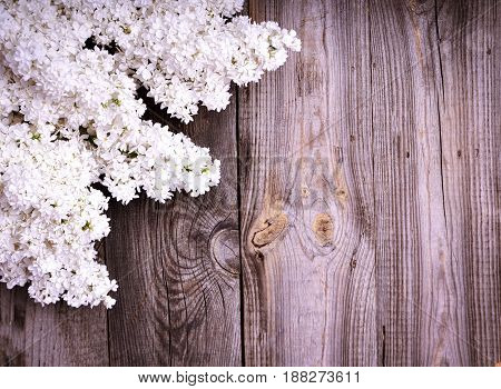 white branch of lilac blossoms on a gray wood background empty space in the middle